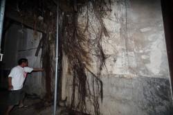 榕樹入侵破壞古蹟 蘇煥智質疑南市過度保守