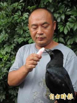 什麼人養什麼鳥! 鳥人陳嘉正養「這種鳥」不意外