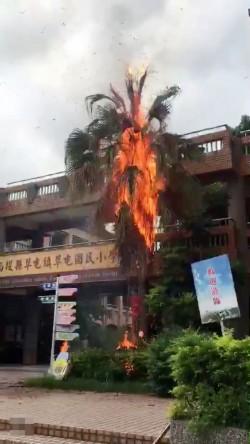 草屯國小出現虎頭蜂窩 捕蜂人煙燻不慎火燒樹