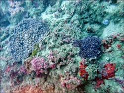 豪雨土石泥流襲擊 墾丁珊瑚蒙塵
