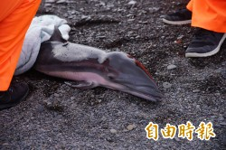 悲!小海豚擱淺枋寮海灘 緊急搶救仍…