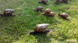 澳男活吞蛞蝓喪命! 金蘭醬油家族曾生食蝸牛5死險滅門