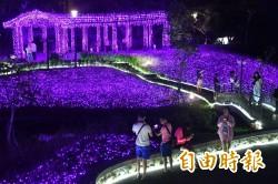 打卡拍美照?四重溪紫色薰衣草燈海 怎麼拍都美