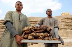 罕見! 6000年前古埃及貓咪、聖甲蟲木乃伊出土