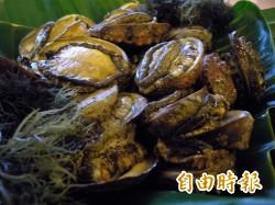 掛鮑魚賣螺肉 攤商辯:螺肉在台灣就叫鮑魚