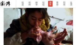 正妹睡豬圈年收破百萬 人工呼吸救活400多頭小豬