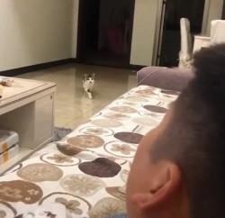 主人每次回頭貓咪就靠近一步 網笑:根本恐怖片