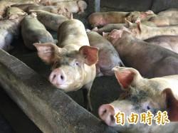 花蓮禁用廚餘養豬 將有10天緩衝期