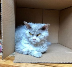 看X小!這隻貓除睡覺其他時間都臭臉 意外成網紅