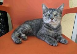 貓盯著你別開心 專家:不懷好意才會將視線鎖定...