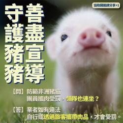 防非洲豬瘟祭連坐惹爭議 蘇揆:業者自身違法才罰
