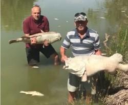 澳洲熱浪破百年最高紀錄 百歲老魚慘遭熱死