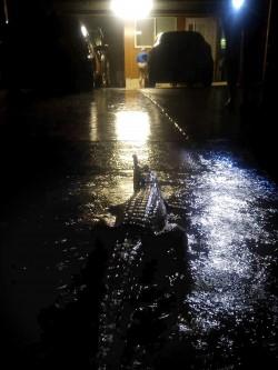 澳洲百年大洪水 巨大鱷魚、毒蛇順水游入市區...