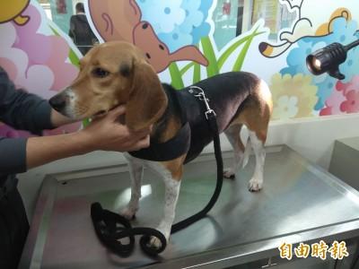 護國神犬被踹 蘇揆斥行為不當籲愛護動物