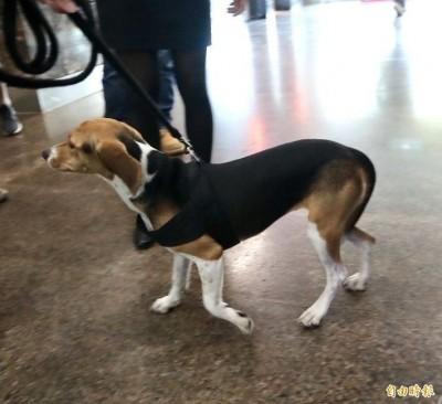 共同守護「護國神犬」!綠委提修法 傷害工作犬「加重處罰」