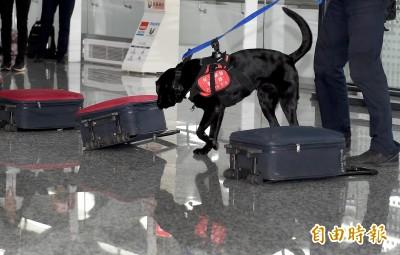 護國神犬增兵!8隻緝毒犬投入訓練 變身檢疫犬