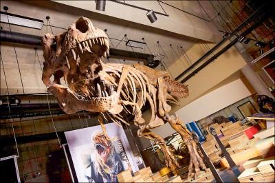 加拿大發現史上最大暴龍化石