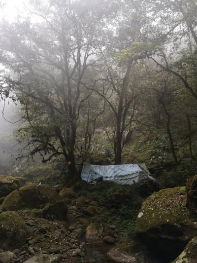 山林悲歌!蛟龍瀑布原始林 處處山老鼠窩、鏈鋸聲迴盪