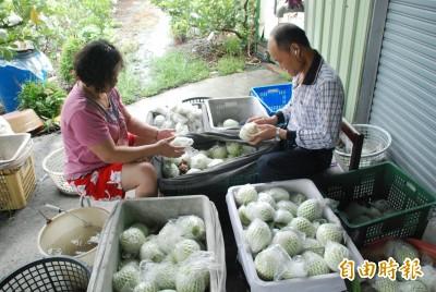 價格低到吃土 果農:韓國瑜最好是每天都在想芭樂