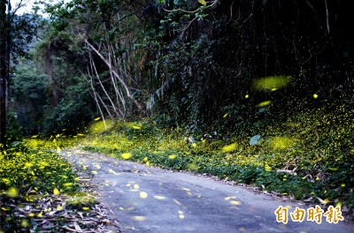螢火蟲的季節又到了 台南關山綠光精靈大爆發