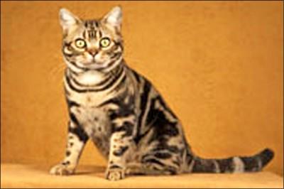 虐死女童3共犯 開庭只關心寵物貓