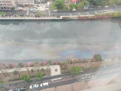 愛河水面漂浮一層油  民眾經過大喊「臭死了」