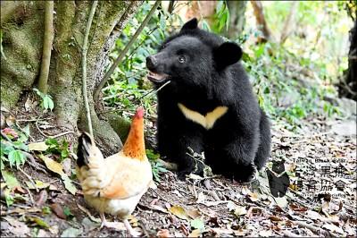 小黑熊妹妹 滿周歲了