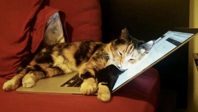 貓咪躺筆電誤踩鍵盤發大財! 主人收到300萬大禮