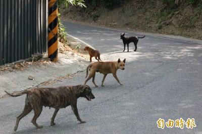 流浪狗破萬只能收容161隻 彰化縣採結紮和強化認養