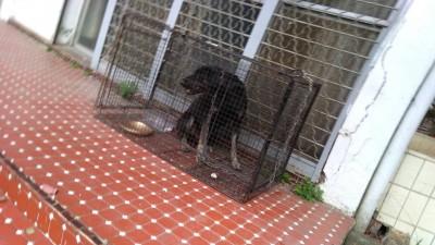 抓到了!害高三生摔車重傷的黑狗落網 白狗仍在逃...