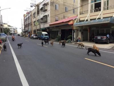 「以後街上可能狗比人多」 嘉義這張照好嚇人