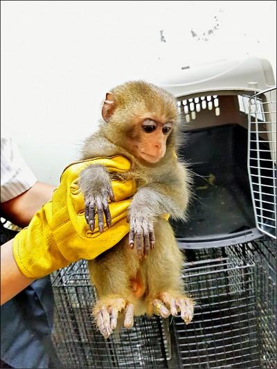 飼養台灣獼猴仍要罰