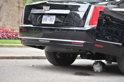 「英國第一貓」發威!一招癱瘓川普全副武裝專車