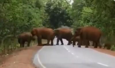 感人! 象群「社會行為」 大象列隊為小象送葬