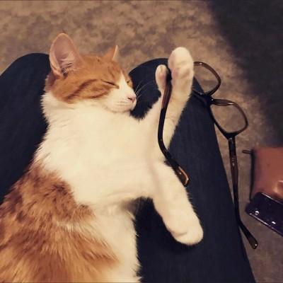 「紐西蘭第一貓」車禍死亡 兇手竟是他