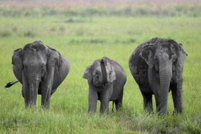 防被火車撞死 印度用「嗡嗡嗡」嚇大象