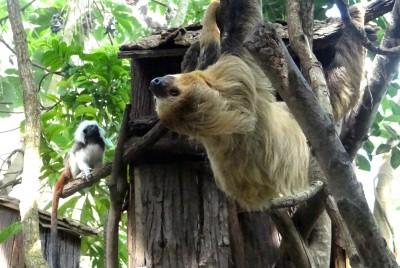 棉頭絹猴「熬夜」偷吃 穿山甲館上演食物爭奪戰