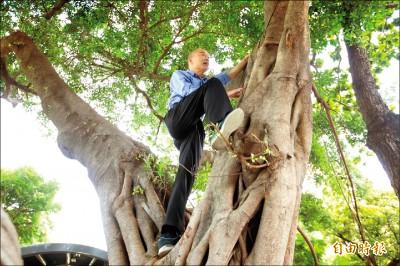 民眾、防疫人員 看傻眼…/韓爬樹找病媒蚊 要人上來補樹洞