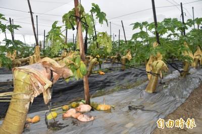 今年第二大損失! 812豪雨農損破億元 高雄流失農田8公頃