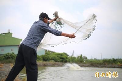 颱風攪局 潮州賽神蝦延至9/1舉行
