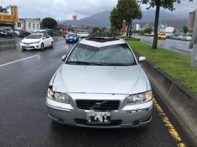 開車忽然眼前一黑!白鹿颳倒路樹 砸凹車頂