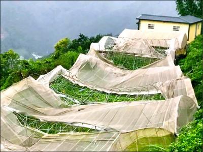 白鹿吹垮南投農作網室 樹枝砸傷遊客