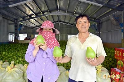 老師當果農 救回媽媽的老欉柚