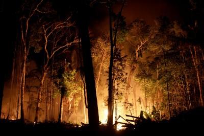 焚燒令沒用... 巴西亞馬遜雨林48小時爆2000起火災