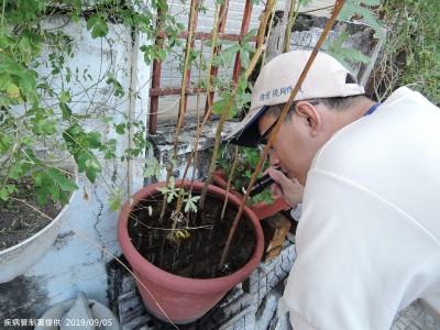 台南北區首現登革熱群聚感染!母去泰國染病回國傳染兄弟檔