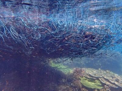 死纏珊瑚礁!廢漁網入侵澎湖後花園 生態潛水達人疾呼搶救