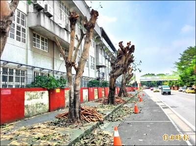 修剪路樹挨批 虎尾農工:為學生安全