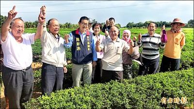 製茶廠拒收購茶青 關西茶農求救