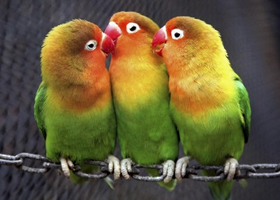 走私被抓包! 法官傳喚13隻鸚鵡當「超萌證人」