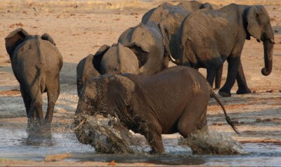 泰國80大象「不明原因」集體狂奔 3柬國勞工慘死